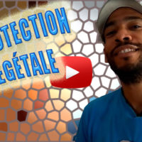protection végétale