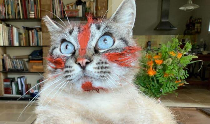 Peinture naturelle sur chat